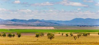 Sorghum fields near Quirindi New South Wales. In rural Australia stock image