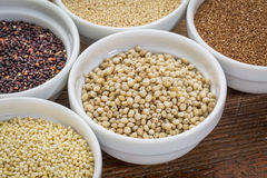 Sorghum gluten free grain. Sorghum and other gluten free grains (amaranth, millet, teff quinoa)  in small ceramic bowls Royalty Free Stock Photo