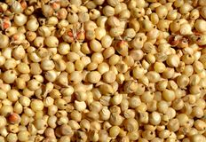 Sorghum Grains. Sorghum  is a common food grain in many parts of world Royalty Free Stock Photography