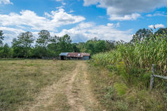 Sorghum Harvest. An old barn next to a sorghum cane field at harvest time Stock Photo