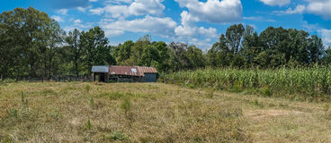 Sorghum Harvest. Panorama of a north Mississippi sorghum field at harvest time Royalty Free Stock Image