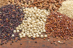 Sorghum and quinoa grains. Sorghum, red and black quinoa, and other glyuten free grains (millet, brown rice, buckwheat, teff Stock Images