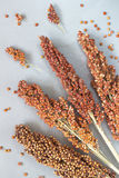 Sorghum on silver-gray background. top view Stock Image