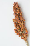 Sorghum twig. On the white background stock images