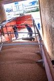 Sorghum wird von einem Arbeiter von einem LKW zu einem Silo entleert Lizenzfreie Stockfotos