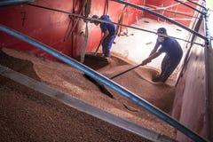 Sorghum wird von einem Arbeiter von einem LKW zu einem Silo entleert Stockfotos
