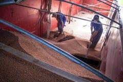 Sorghum wird von einem Arbeiter von einem LKW zu einem Silo entleert Lizenzfreies Stockbild