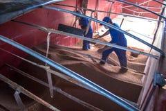 Sorghum wird von einem Arbeiter von einem LKW zu einem Silo entleert Lizenzfreie Stockbilder
