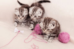 Sorglose Kätzchen Lizenzfreies Stockbild