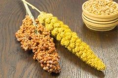 Sorgo dei ramoscelli e miglio giallo Grano in un canestro di legno Fotografia Stock