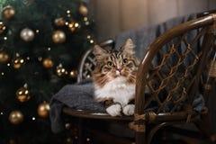 Soriano e gatto felice Stagione 2017, nuovo anno di Natale Immagini Stock