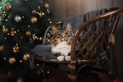 Soriano e gatto felice Stagione 2017, nuovo anno di Natale Fotografia Stock