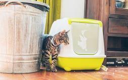 Soriano grigio a strisce che sta accanto ad un cestino per i rifiuti Fotografia Stock