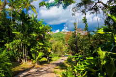 Soroa, a cuban touristic and natural attraction. The garden at Soroa, a touristic and natural attraction in Cuba Stock Photos