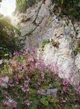 Soroa Orchid Botanical Garden, Pinar del Rio, Cuba.  stock photos