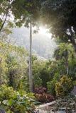 Soroa Orchid Botanical Garden, Pinar del Rio, Cuba.  stock image