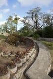 Soroa Orchid Botanical Garden, Pinar del Rio, Cuba.  royalty free stock photos