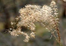 Soroksári botanikus kert Royalty Free Stock Photography