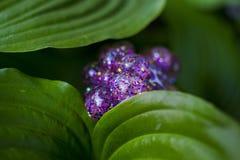 Sorpresa brillante nel giardino fotografia stock