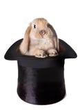 Sorpresa del coniglietto Fotografie Stock Libere da Diritti