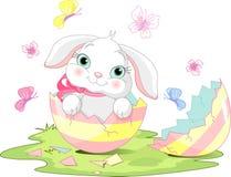 Sorpresa del coniglietto di pasqua Immagine Stock