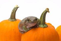 Sorpresa di Halloween Fotografia Stock Libera da Diritti