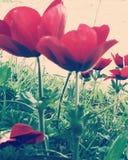 Sorprese della primavera Fotografia Stock
