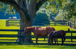 Sorrel φοράδα και Foal στοκ φωτογραφίες με δικαίωμα ελεύθερης χρήσης