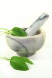 Sorrel. Fresh sorrel in a mortar Stock Photography
