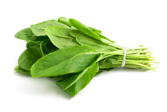 Sorrel Stock Photography