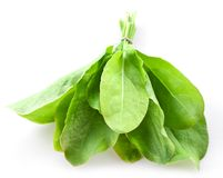 Sorrel. Isolated on white background royalty free stock images