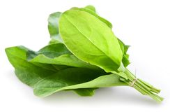Sorrel. Isolated on white background stock photography