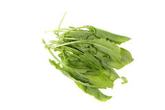 Sorrel Stock Images