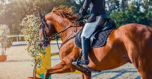 Sorrel dressage horse and rider in uniform performing jump at show jumping competition. Equestrian sport background. Chesnut horse portrait during dressage Stock Photo