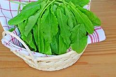 Sorrel. Fresh sorrel leaves in basket over wooden background Royalty Free Stock Photos