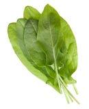 Sorrel herb closeup Stock Photos