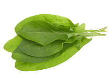 Sorrel herb closeup Royalty Free Stock Images