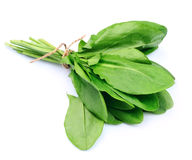 Sorrel herbal. Close up on white royalty free stock photos