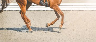 Sorrel horse, advanced dressage test on equestrian competition, equine theme. Saddle, bridle, boots and other details Royalty Free Stock Photo