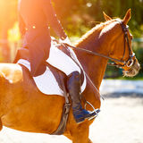 Sorrel horse with rider at dressage competitions Stock Photos