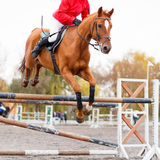 Sorrel horse with rider man jumping over obstacle. On show jumping contest Stock Photos