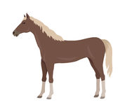 Sorrel Horse Vector Illustration in Flat Design Royalty Free Stock Photos