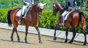 Dressage horses and riders. Sorrel horses portrait during equestrian sport competition. Advanced dressage test. Copy space for your text stock photos
