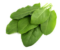 Sorrel isolated on white background. Tasty, natural Stock Images