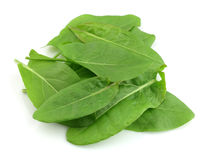 Sorrel leaves. On a white background Stock Photography