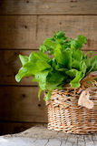 Sorrel leaves in a basket. On a wooden table Stock Photo
