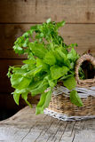 Sorrel leaves in a basket. On a wooden table Royalty Free Stock Image