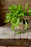 Sorrel leaves in a basket. On a wooden table Stock Photography