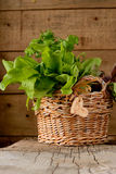 Sorrel leaves in a basket. On a wooden table Stock Images