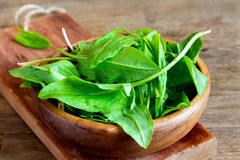 Sorrel leaves. Fresh organic sorrel leaves in wooden bowl royalty free stock photo